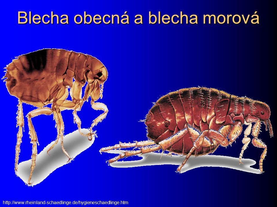 Blechy (Pulex irritans a další) Zatímco vši jsou druhově úzce specifické, blechy nejsou na druh příliš vázány.