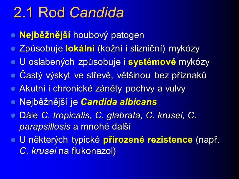 Společné vlastnosti kvasinek Jsou to kulaté, oválné i protáhlé buňky – blastokonidie. Jsou zřetelně větší než bakterie (průměr 3 – 15 µm). Pučí z nich