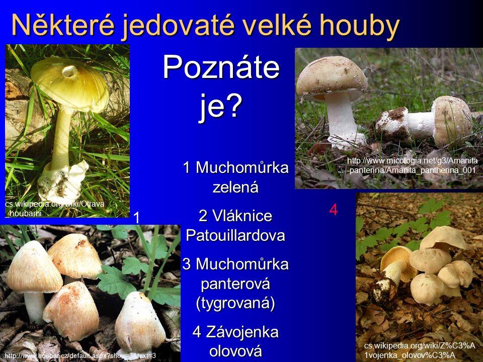 Houby a zdraví Kromě mikroskopických hub, o kterých je řeč v tomto praktiku, nesmíme zapomenout ani na houby, které mají makroskopické plodnice Kromě mikroskopických hub, o kterých je řeč v tomto praktiku, nesmíme zapomenout ani na houby, které mají makroskopické plodnice Otravy plodnicemi velkých hub (muchomůrka zelená, vláknice Patouillardova, závojenka olovová, muchomůrka panterová, lysohlávky) každoročně znamenají zdravotní obtíže desítek lidí.