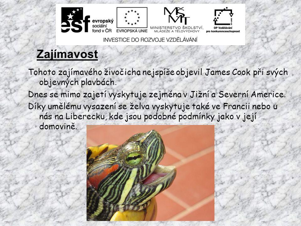 Zajímavost Tohoto zajímavého živočicha nejspíše objevil James Cook při svých objevných plavbách.