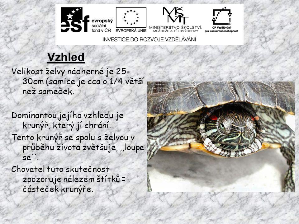Vzhled Velikost želvy nádherné je 25- 30cm (samice je cca o 1/4 větší než sameček.