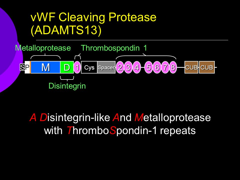 vWF Cleaving Protease (ADAMTS13) CUB S M PCysDSpacer1234 5 6 7 8CUB Metalloprotease Disintegrin Thrombospondin 1 A Disintegrin-like And Metalloprotease with ThromboSpondin-1 repeats