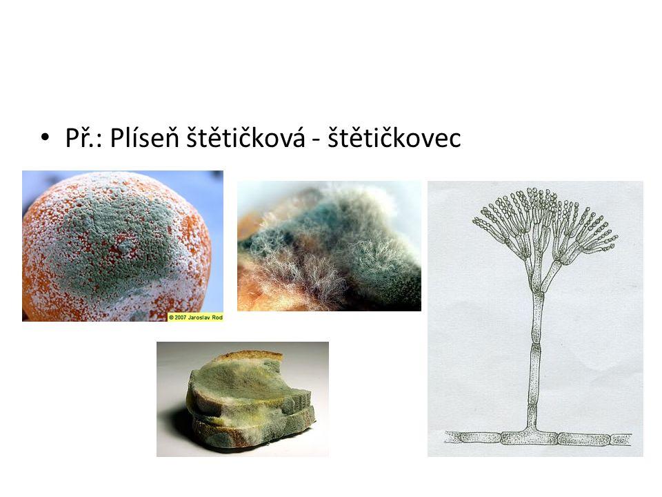 3.) Jednobuněčné houby Jsou to Kvasinky Rozmnožují se tzv.