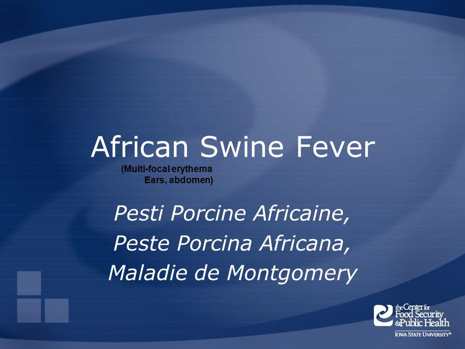 African Swine Fever Pesti Porcine Africaine, Peste Porcina Africana, Maladie de Montgomery (Multi-focal erythema Ears, abdomen)