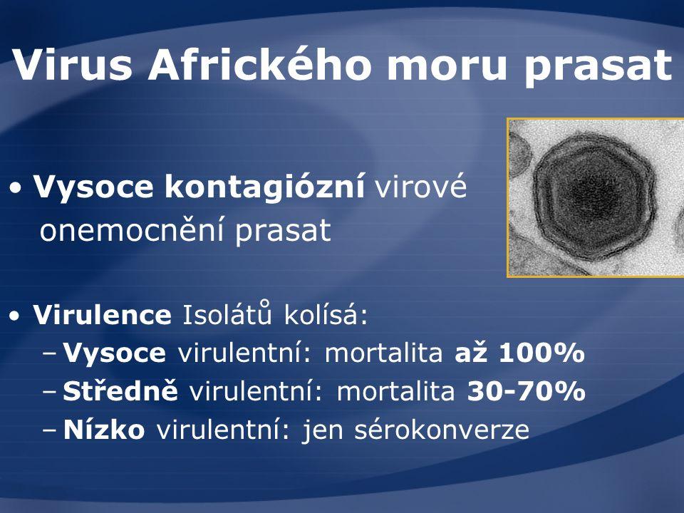 Virus Afrického moru prasat Vysoce kontagiózní virové onemocnění prasat Virulence Isolátů kolísá: –Vysoce virulentní: mortalita až 100% –Středně virulentní: mortalita 30-70% –Nízko virulentní: jen sérokonverze