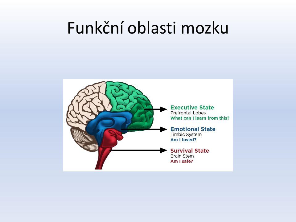 Funkční oblasti mozku