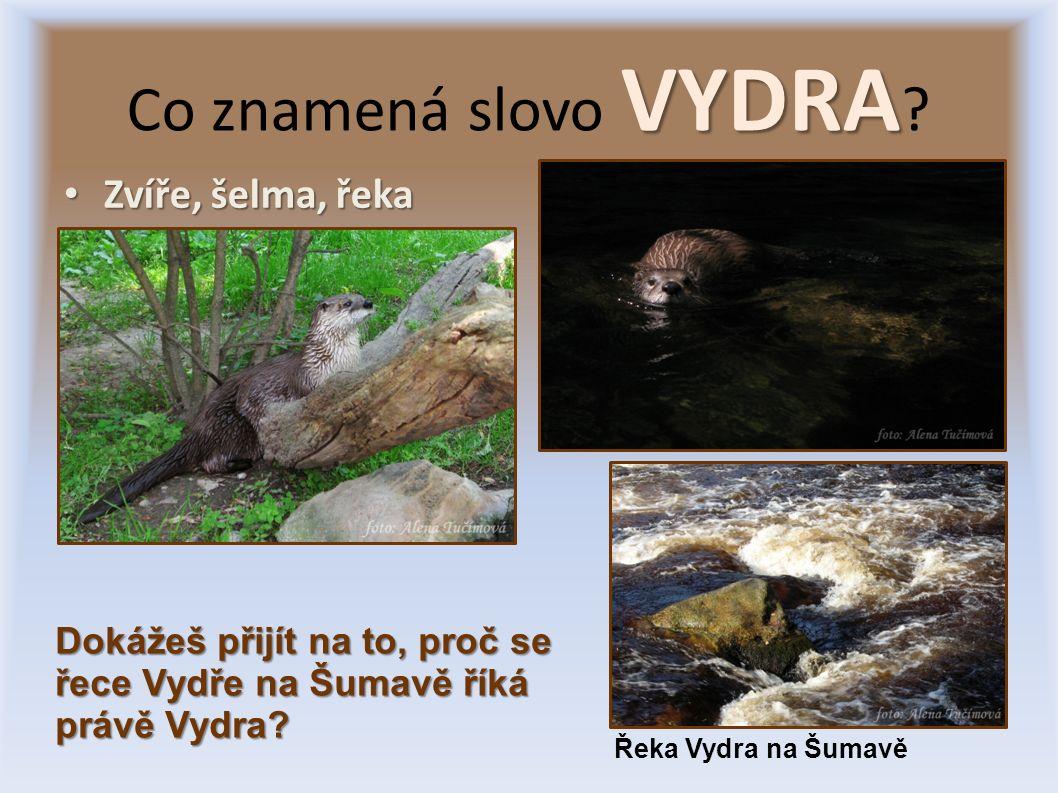 Zvíře, šelma, řeka Zvíře, šelma, řeka VYDRA Co znamená slovo VYDRA .