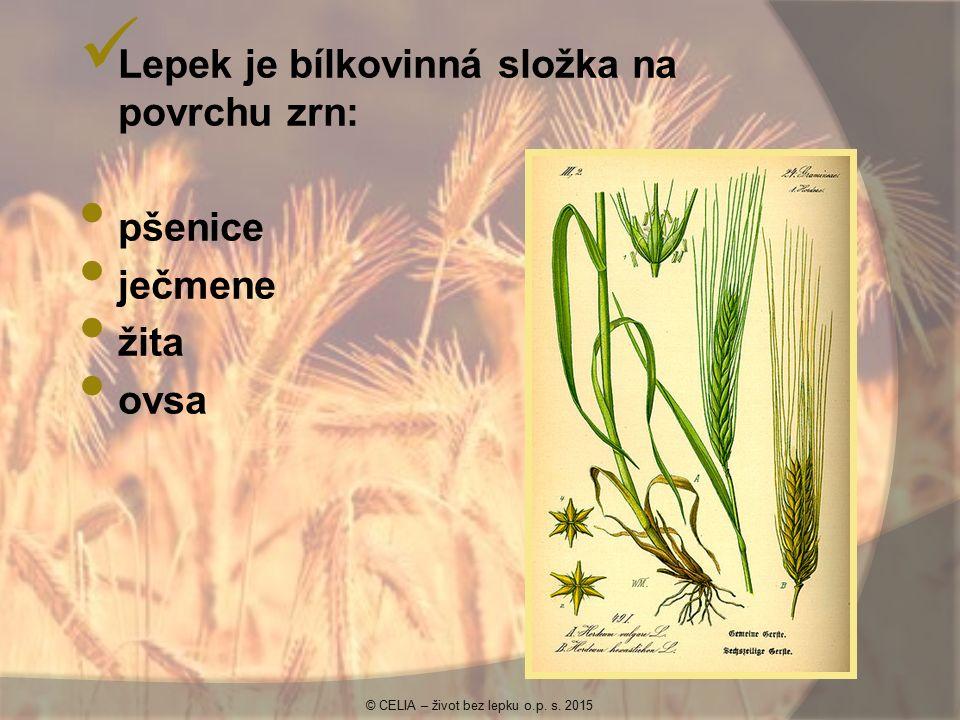 Lepek je bílkovinná složka na povrchu zrn: pšenice ječmene žita ovsa © CELIA – život bez lepku o.p. s. 2015