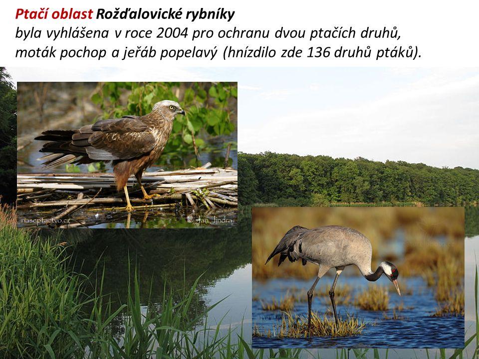 Ptačí oblast Rožďalovické rybníky byla vyhlášena v roce 2004 pro ochranu dvou ptačích druhů, moták pochop a jeřáb popelavý (hnízdilo zde 136 druhů ptáků).