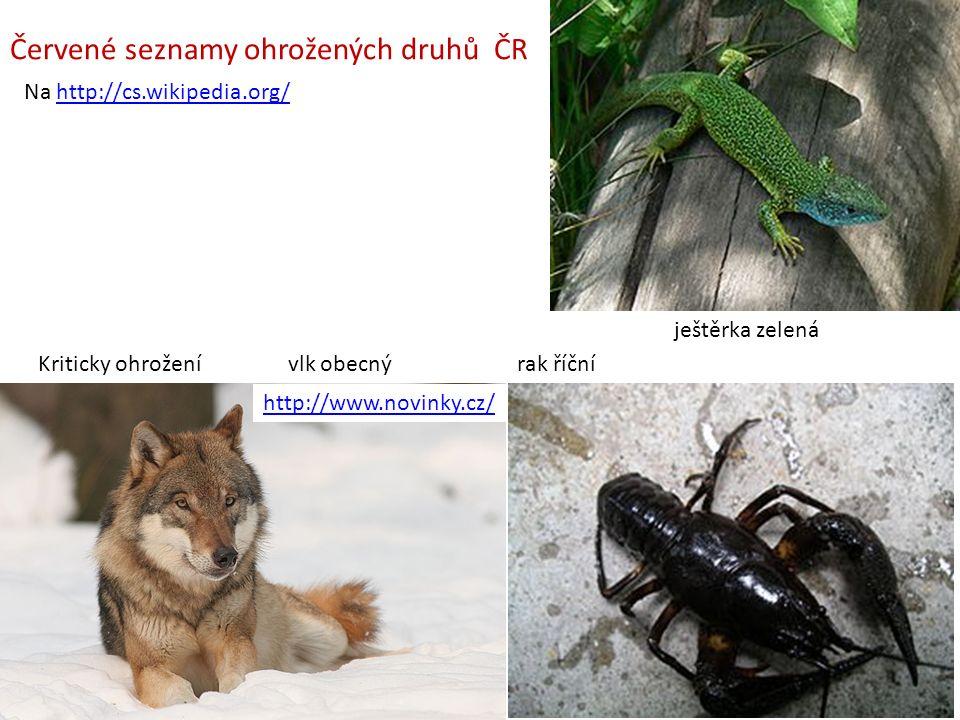 Červené seznamy ohrožených druhů ČR Na http://cs.wikipedia.org/http://cs.wikipedia.org/ Kriticky ohrožení vlk obecnýrak říční ještěrka zelená http://www.novinky.cz/