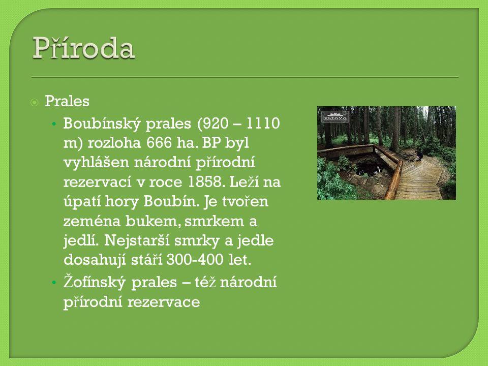  Prales Boubínský prales (920 – 1110 m) rozloha 666 ha.
