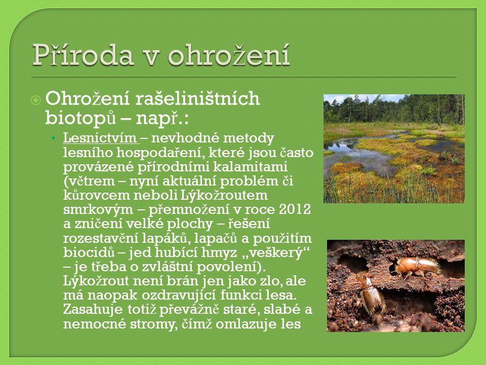  Ohro ž ení rašeliništních biotop ů – nap ř.: Lesnictvím – nevhodné metody lesního hospoda ř ení, které jsou č asto provázené p ř írodními kalamitami