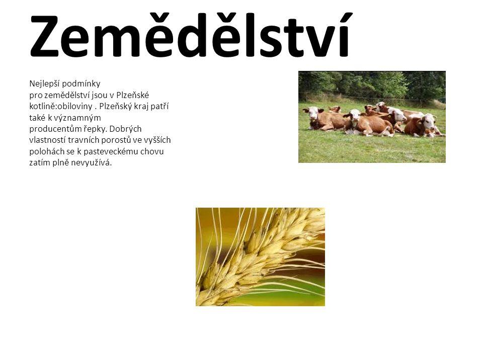 Zemědělství Nejlepší podmínky pro zemědělství jsou v Plzeňské kotlině:obiloviny. Plzeňský kraj patří také k významným producentům řepky. Dobrých vlast