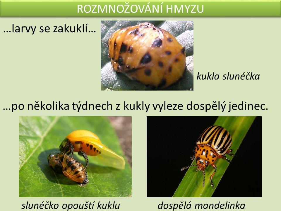 VÝZNAM HMYZU PRO ČLOVĚKA UŽITEČNÝ ŠKODLIVÝ -opyluje rostliny -poskytuje med -hubí škůdce -požírá úrodu na polích, v zahradách -přenáší nemoci Vybarvi: včela mandelinka klíště čmelák bělásek slunéčko blecha veš moucha