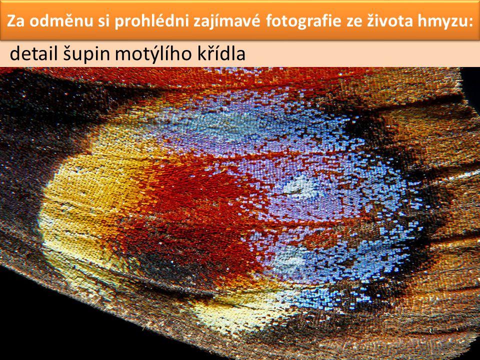Za odměnu si prohlédni zajímavé fotografie ze života hmyzu: detail šupin motýlího křídla