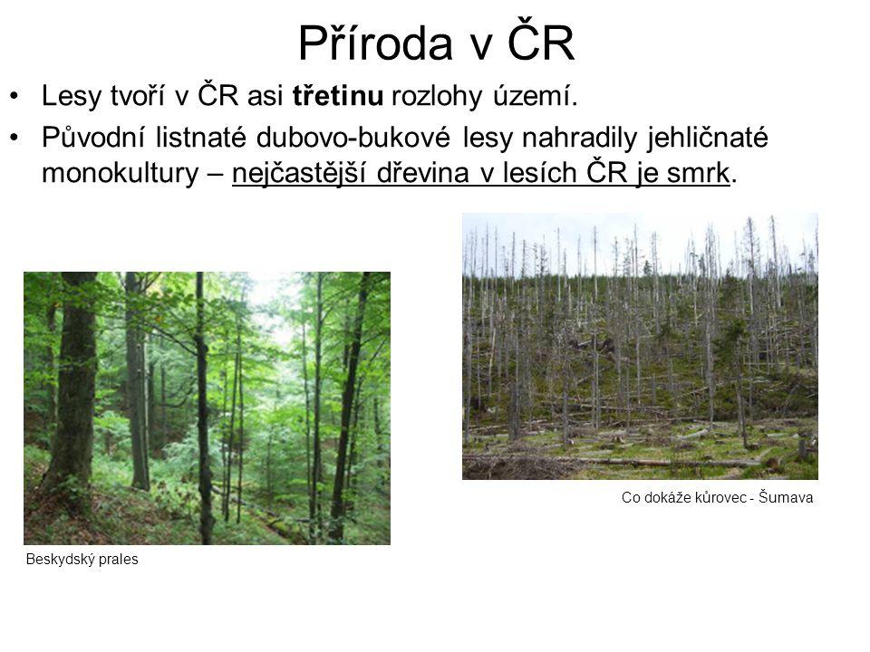 Příroda v ČR Lesy tvoří v ČR asi třetinu rozlohy území. Původní listnaté dubovo-bukové lesy nahradily jehličnaté monokultury – nejčastější dřevina v l