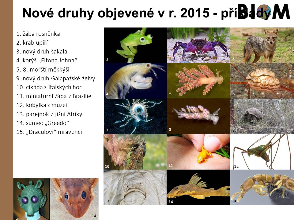 """Nové druhy objevené v r. 2015 - příklady 1. žába rosněnka 2. krab upíří 3. nový druh šakala 4. korýš """"Eltona Johna"""" 5.-8. mořští měkkýši 9. nový druh"""