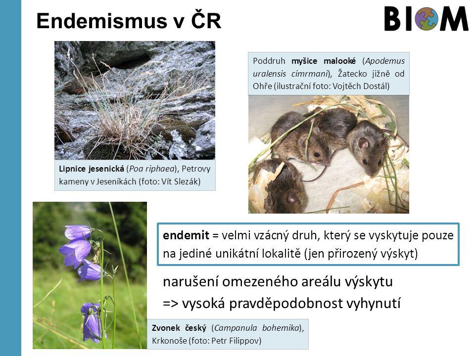 Endemismus v ČR endemit = velmi vzácný druh, který se vyskytuje pouze na jediné unikátní lokalitě (jen přirozený výskyt) Lipnice jesenická (Poa riphaea), Petrovy kameny v Jeseníkách (foto: Vít Slezák) Zvonek český (Campanula bohemika), Krkonoše (foto: Petr Filippov) Poddruh myšice malooké (Apodemus uralensis cimrmani), Žatecko jižně od Ohře (ilustrační foto: Vojtěch Dostál) narušení omezeného areálu výskytu => vysoká pravděpodobnost vyhynutí