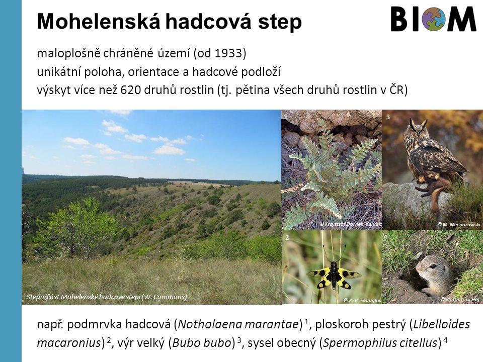 Mohelenská hadcová step maloplošně chráněné území (od 1933) unikátní poloha, orientace a hadcové podloží výskyt více než 620 druhů rostlin (tj. pětina