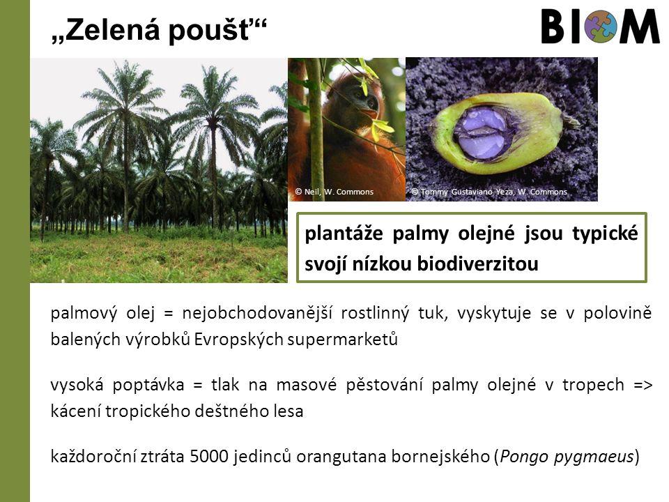 """""""Zelená poušť palmový olej = nejobchodovanější rostlinný tuk, vyskytuje se v polovině balených výrobků Evropských supermarketů vysoká poptávka = tlak na masové pěstování palmy olejné v tropech => kácení tropického deštného lesa každoroční ztráta 5000 jedinců orangutana bornejského (Pongo pygmaeus) plantáže palmy olejné jsou typické svojí nízkou biodiverzitou © Tommy Gustaviano Yeza, W."""