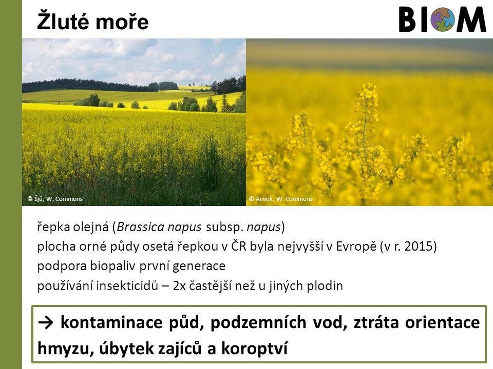 Žluté moře řepka olejná (Brassica napus subsp. napus) plocha orné půdy osetá řepkou v ČR byla nejvyšší v Evropě (v r. 2015) podpora biopaliv první gen