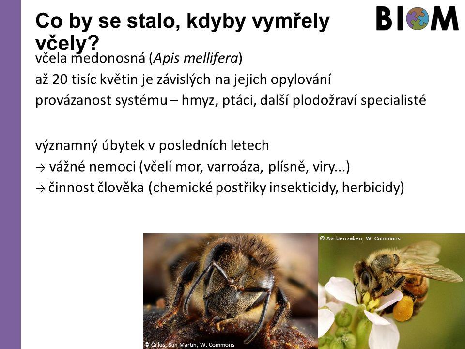 Co by se stalo, kdyby vymřely včely? včela medonosná (Apis mellifera) až 20 tisíc květin je závislých na jejich opylování provázanost systému – hmyz,