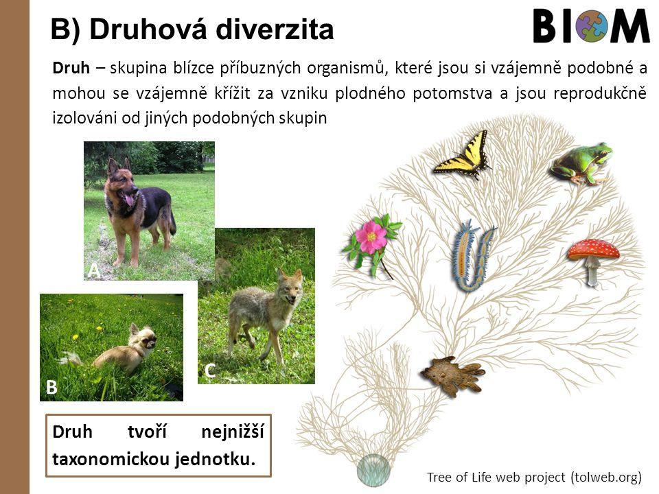 B) Druhová diverzita Tree of Life web project (tolweb.org) Druh – skupina blízce příbuzných organismů, které jsou si vzájemně podobné a mohou se vzáje