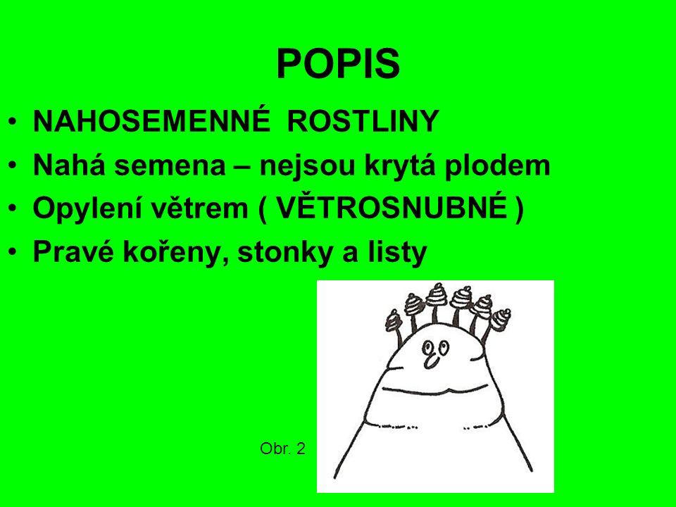 POPIS NAHOSEMENNÉ ROSTLINY Nahá semena – nejsou krytá plodem Opylení větrem ( VĚTROSNUBNÉ ) Pravé kořeny, stonky a listy Obr.