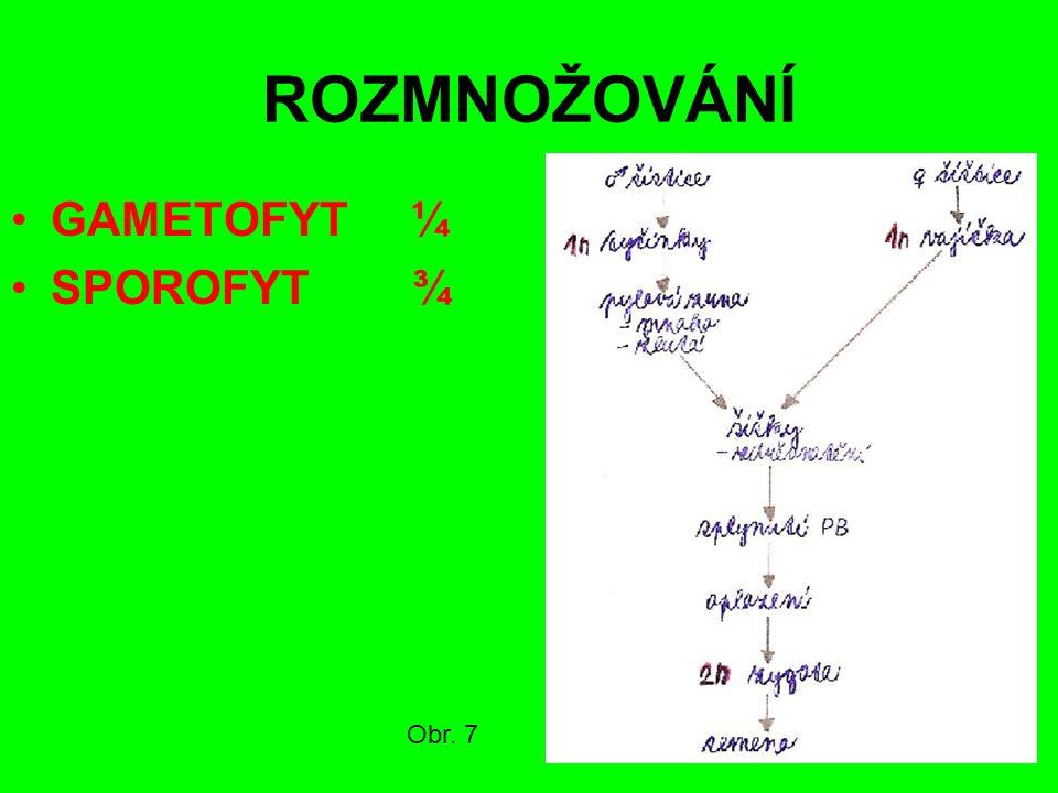 HNĚDÉ UHLÍ Třetihory Stromy a keře Dřevnaté stonky Pryskyřice (smůla) Sokolov a Most