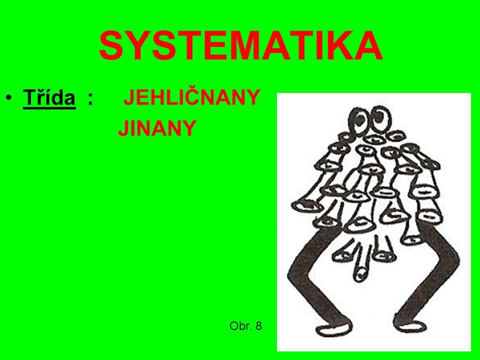 SYSTEMATIKA Třída : JEHLIČNANY JINANY Obr. 8