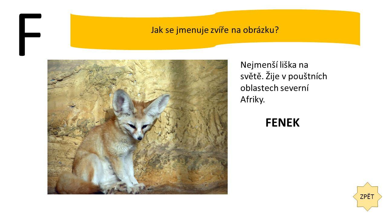 F ZPĚT Jak se jmenuje zvíře na obrázku? Nejmenší liška na světě. Žije v pouštních oblastech severní Afriky. FENEK