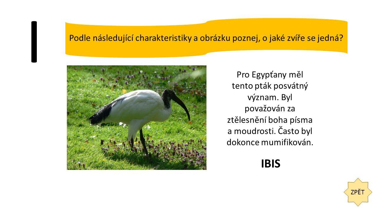 I ZPĚT Podle následující charakteristiky a obrázku poznej, o jaké zvíře se jedná? Pro Egypťany měl tento pták posvátný význam. Byl považován za ztěles