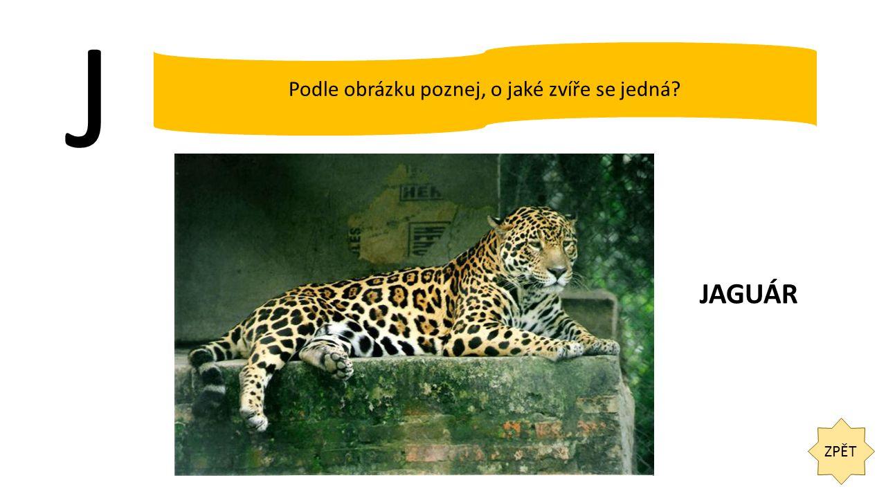 J ZPĚT Podle obrázku poznej, o jaké zvíře se jedná JAGUÁR