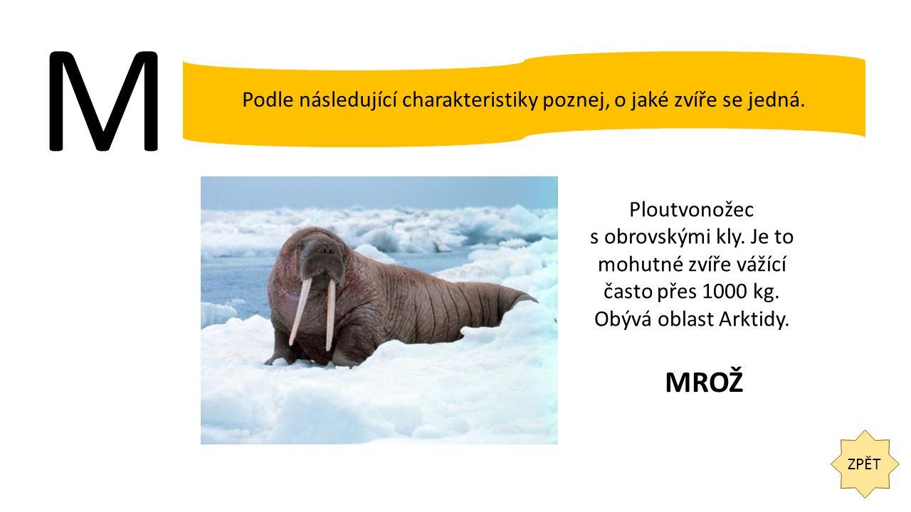 M ZPĚT Podle následující charakteristiky poznej, o jaké zvíře se jedná. Ploutvonožec s obrovskými kly. Je to mohutné zvíře vážící často přes 1000 kg.