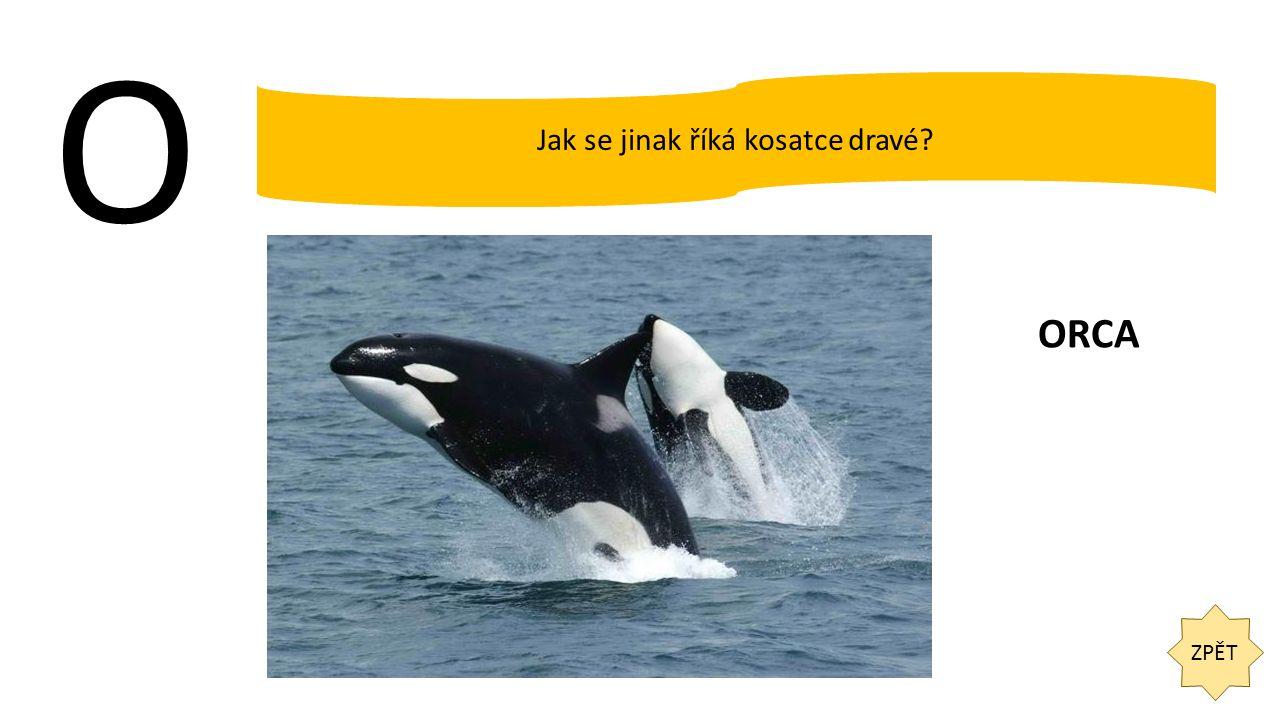 O ZPĚT Jak se jinak říká kosatce dravé? ORCA