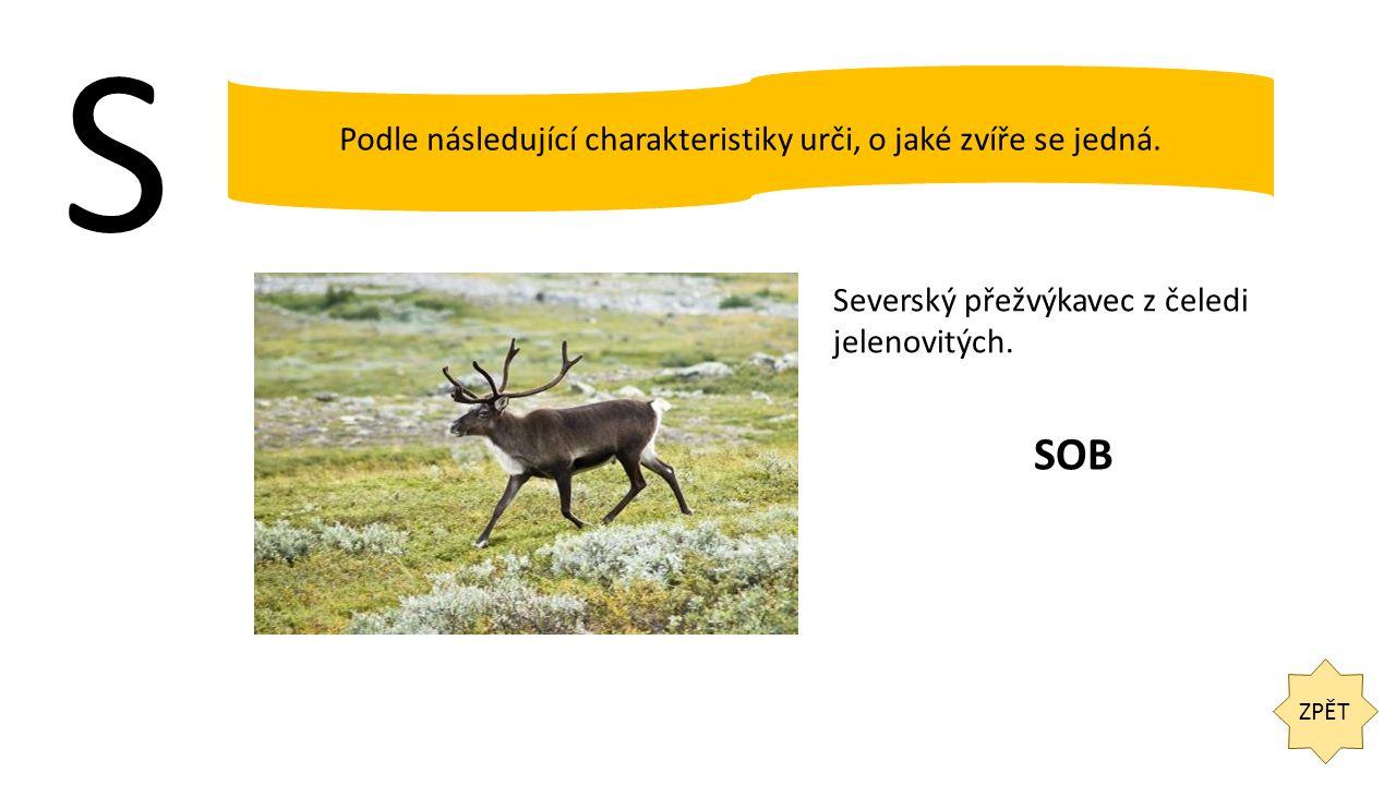 S ZPĚT Podle následující charakteristiky urči, o jaké zvíře se jedná. Severský přežvýkavec z čeledi jelenovitých. SOB