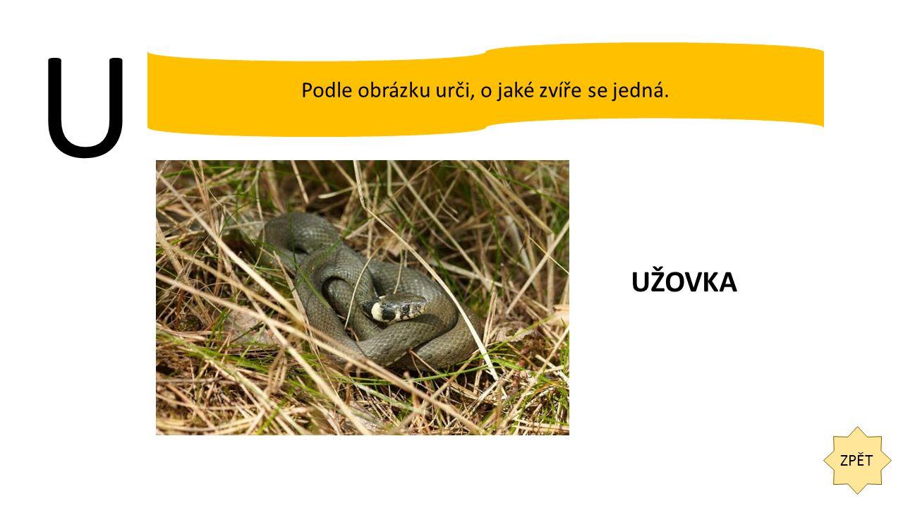 U ZPĚT Podle obrázku urči, o jaké zvíře se jedná. UŽOVKA