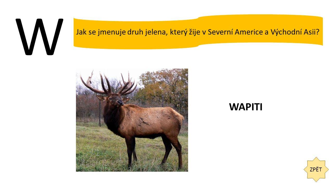 W ZPĚT Jak se jmenuje druh jelena, který žije v Severní Americe a Východní Asii? WAPITI