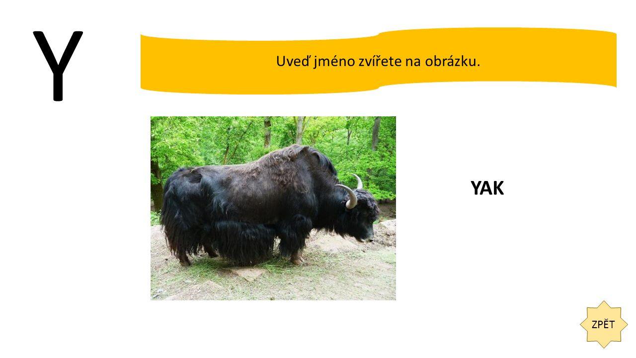 Y ZPĚT Uveď jméno zvířete na obrázku. YAK