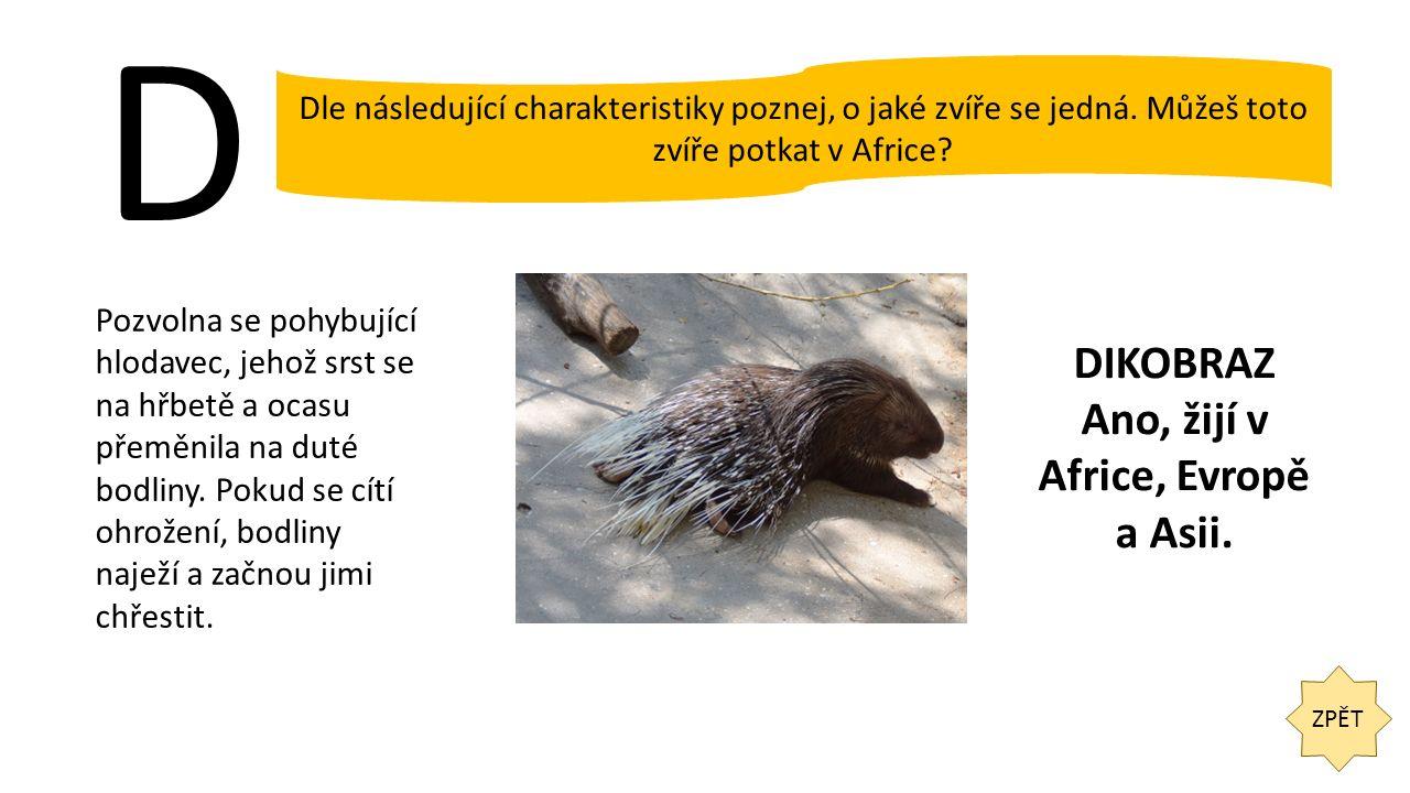 D ZPĚT Dle následující charakteristiky poznej, o jaké zvíře se jedná. Můžeš toto zvíře potkat v Africe? Pozvolna se pohybující hlodavec, jehož srst se