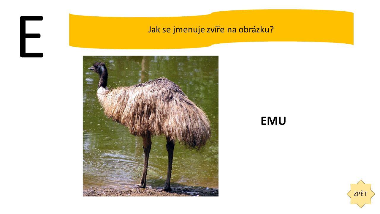 E ZPĚT Jak se jmenuje zvíře na obrázku? EMU