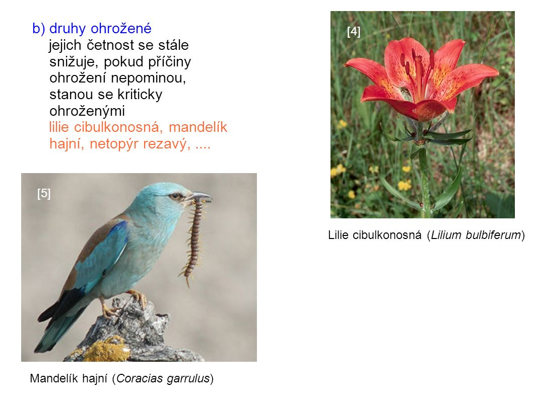 b) druhy ohrožené jejich četnost se stále snižuje, pokud příčiny ohrožení nepominou, stanou se kriticky ohroženými lilie cibulkonosná, mandelík hajní, netopýr rezavý,....