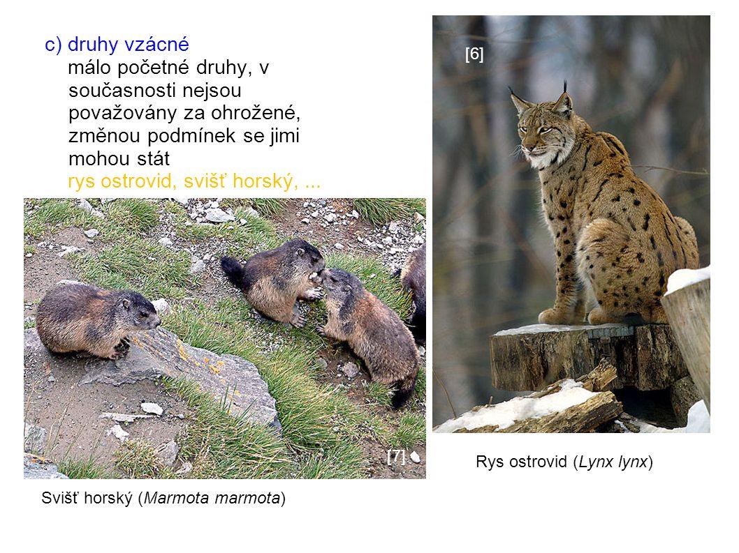 c) druhy vzácné málo početné druhy, v současnosti nejsou považovány za ohrožené, změnou podmínek se jimi mohou stát rys ostrovid, svišť horský,...