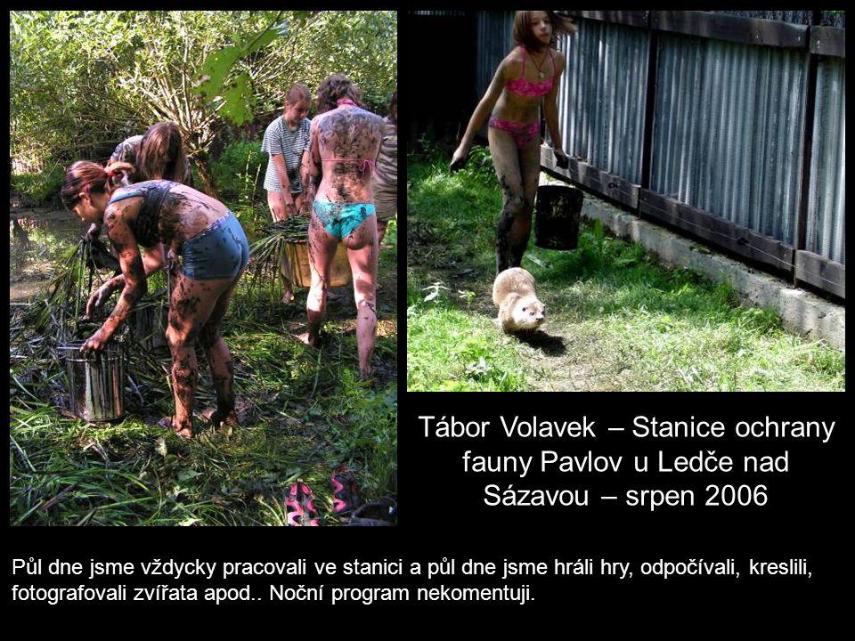 Tábor Volavek – Stanice ochrany fauny Pavlov u Ledče nad Sázavou – srpen 2006 Půl dne jsme vždycky pracovali ve stanici a půl dne jsme hráli hry, odpočívali, kreslili, fotografovali zvířata apod..