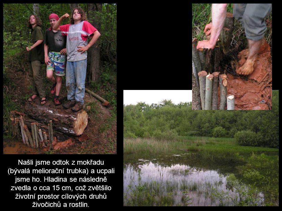 Našli jsme odtok z mokřadu (bývalá meliorační trubka) a ucpali jsme ho.