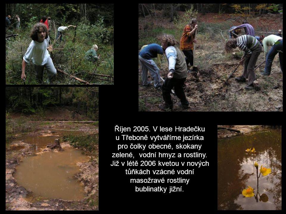 Září 2005 – v lokalitě U Prášků vyřezáváme, vysekáváme a pálíme nálet nežádoucích dřevin, abychom uvolnili životní prostor pro život vzácného hvozdíku pontederova.