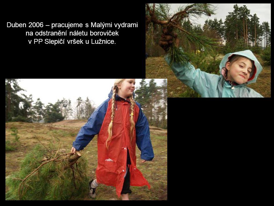 Duben 2006 – pracujeme s Malými vydrami na odstranění náletu boroviček v PP Slepičí vršek u Lužnice.