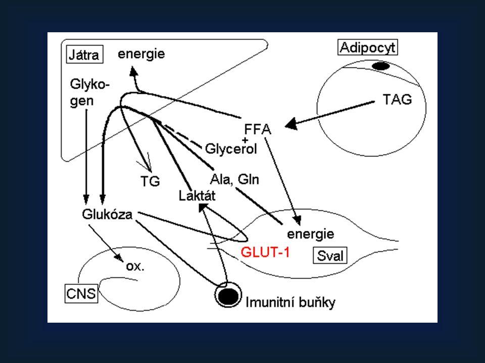 Ekonomické aspekty (cena za pac./den) Enterální výživa –Diason LE, 2000 ml, 1500kcal= 226 g glukózy, 84 g TG, 86 g proteinů, 3g vlákniny, vitamíny + stop.