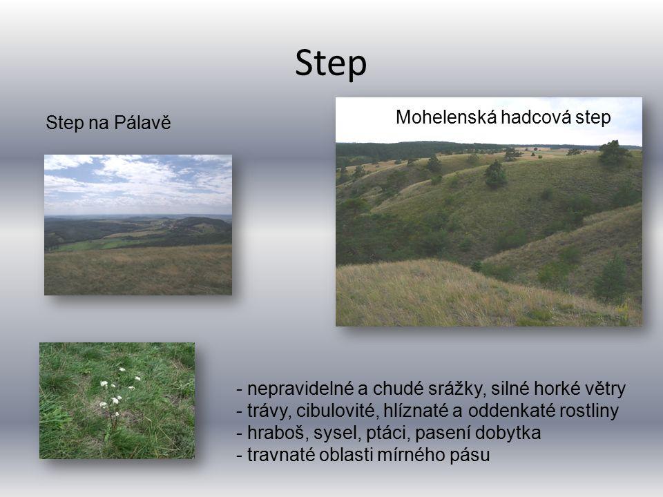 Step Mohelenská hadcová step Step na Pálavě - nepravidelné a chudé srážky, silné horké větry - trávy, cibulovité, hlíznaté a oddenkaté rostliny - hraboš, sysel, ptáci, pasení dobytka - travnaté oblasti mírného pásu
