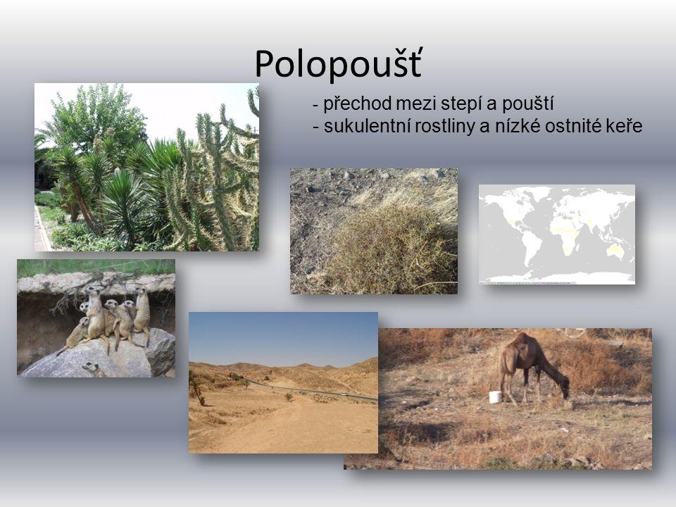 Polopoušť - přechod mezi stepí a pouští - sukulentní rostliny a nízké ostnité keře